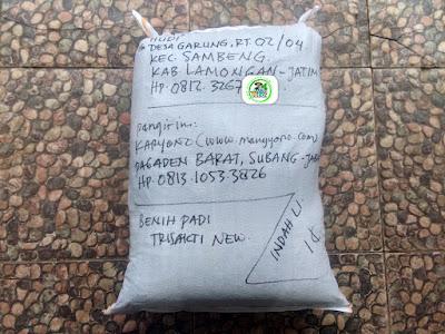 Benih padi yang dibeli   HUDI Lamongan, Jatim.  (Setelah packing karung ).