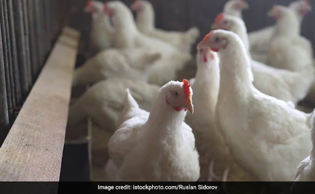 Bird Flu Spreading Its wings: Reached 12 States of India