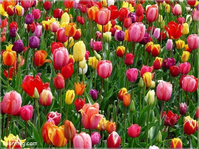 صور زهور 9 | Flowers Images 9