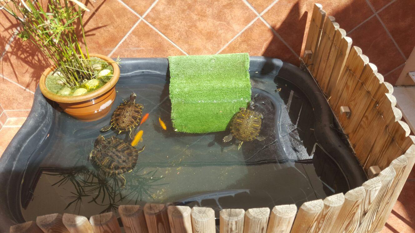 Vida tortuguera fin de la hibernaci n for Como hacer un estanque casero