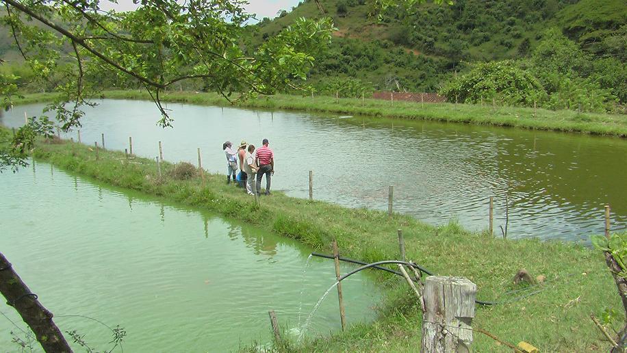 Centro latinoamericano de especies menores en trujillo for Proyecto cria de peces en estanques