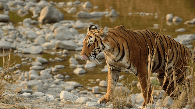 jim corbett national park packages from delhi