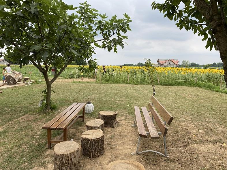 Area relax al labirinto di girasoli