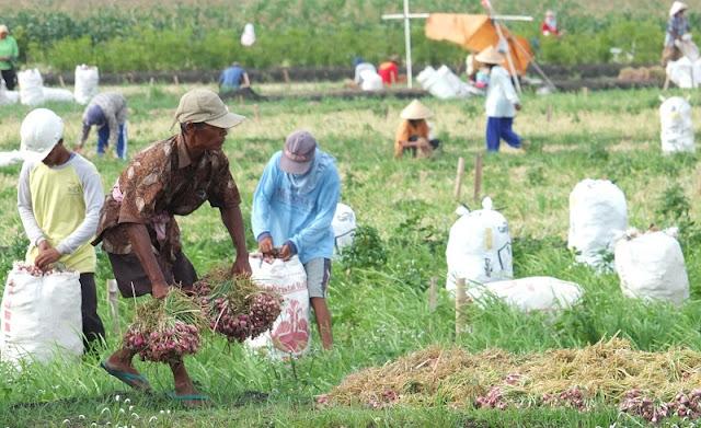 Fokus Infrastruktur, HKTI: Pemerintah Abai terhadap Petani dan Nelayan