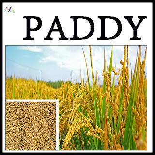 Paddy Varieties