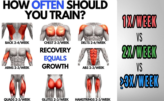How Often Should You Train Each Muscle