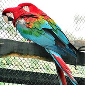 My Birds Pics Parrot S Price In India