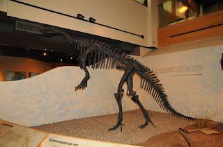Tyrannosaurus rex Wyoming State Museum