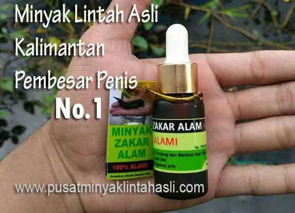 Minyak Lintah Kalimantan