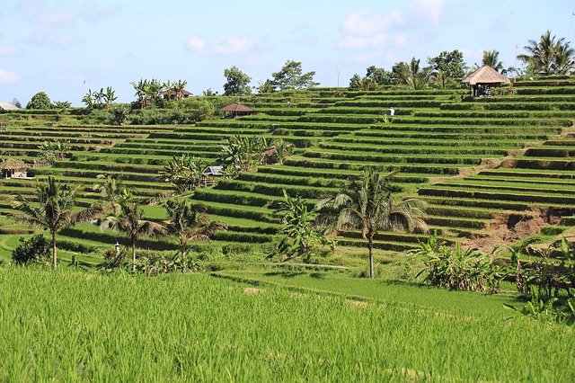 Jatiluwih World Heritage Site Ricefield-Terraces Tourist Area - Tourist, Objects, Attractions, Places, Areas, Destinations, Spots, Regions, Jatiluwih, Penebel, Village, Tabanan, Ricefield, Terraces, Bali, Attractions