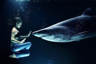 القرش الابيض الكبيرGreat White Shark