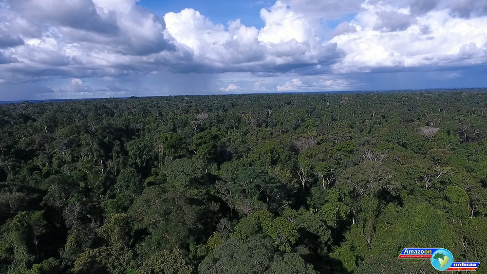 Floresta Nacional do Tapajós é uma das unidades de conservação mais visitadas do Norte