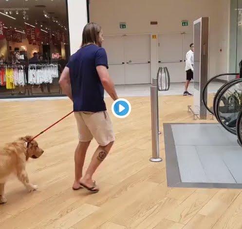 Quante volte avete preso in braccio il vostro cane? Video Golden Retriever che emoziona Internet.