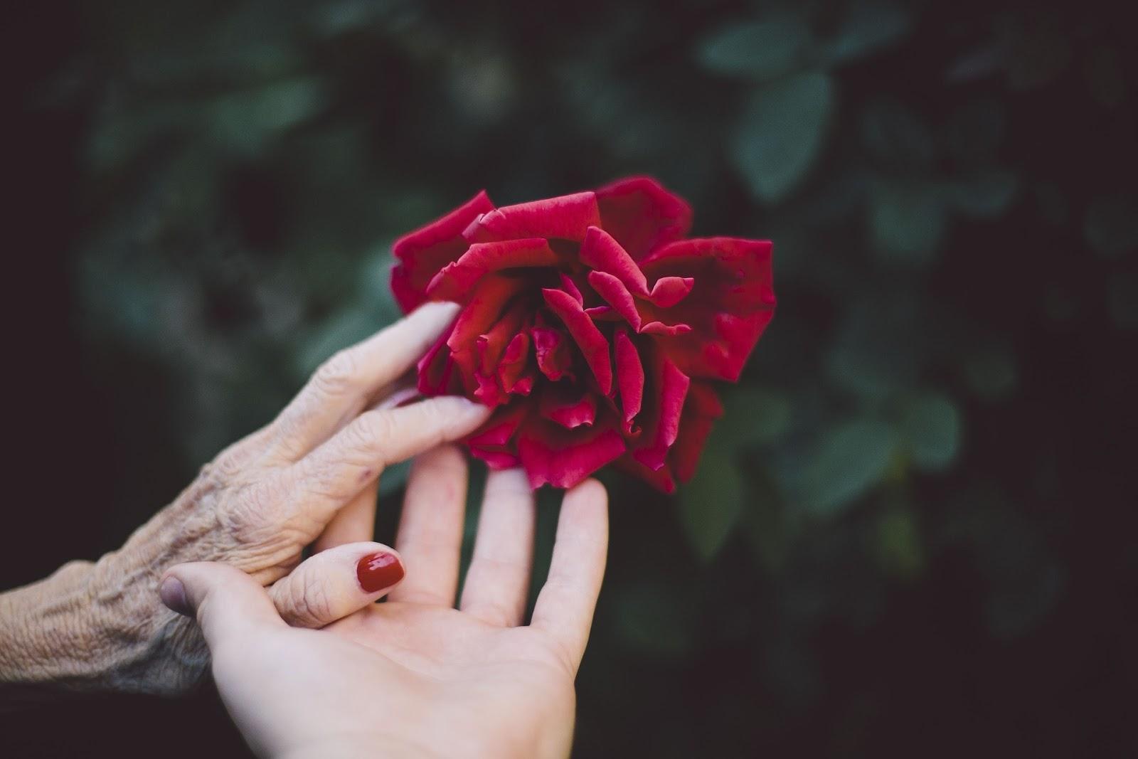 8 Gambar Bunga Mawar Merah Yang Sangat Cantik Gambar Indah