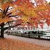 Lưu lại những địa điểm đẹp ở Vancouver để ngắm cảnh mùa thu