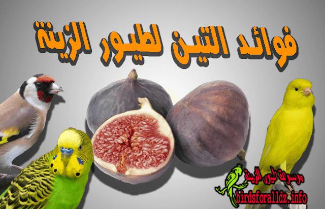 فوائد فاكهة التين المجفف للطيور