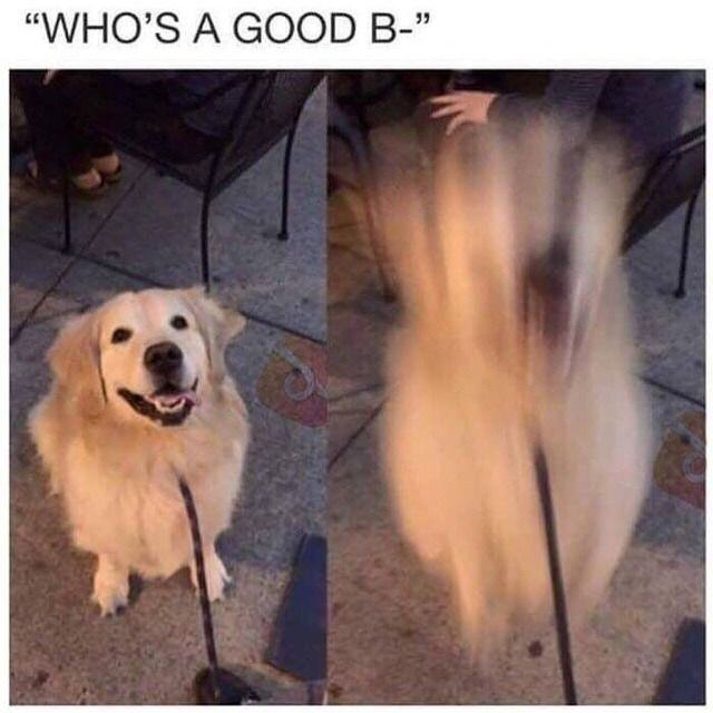 Funny Who's A Good B- Dog Meme Picture