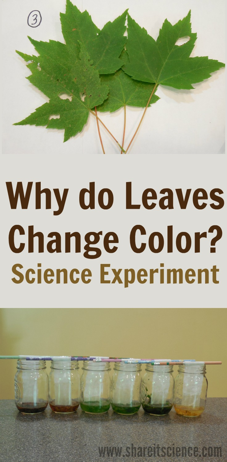Share it! Science : Science Experiment: The Hidden Colors in a Leaf