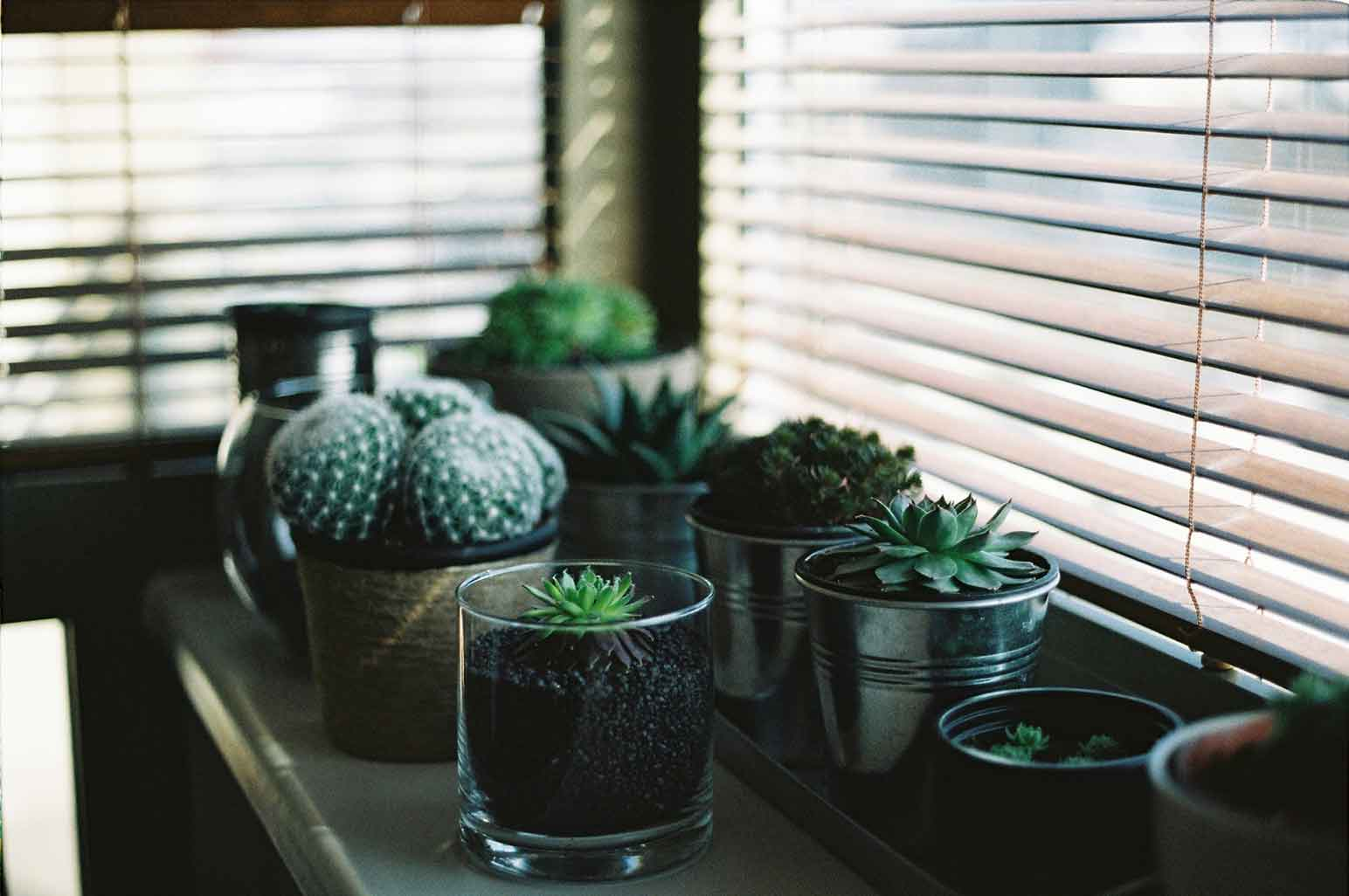 6 Signs It's Time to Replace Your Window Blind