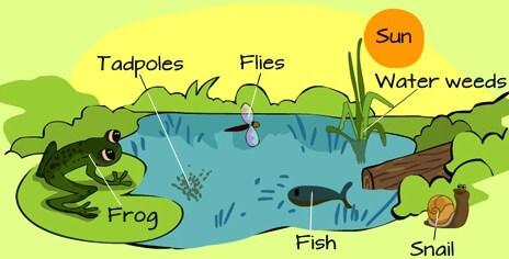 Komponen biotik