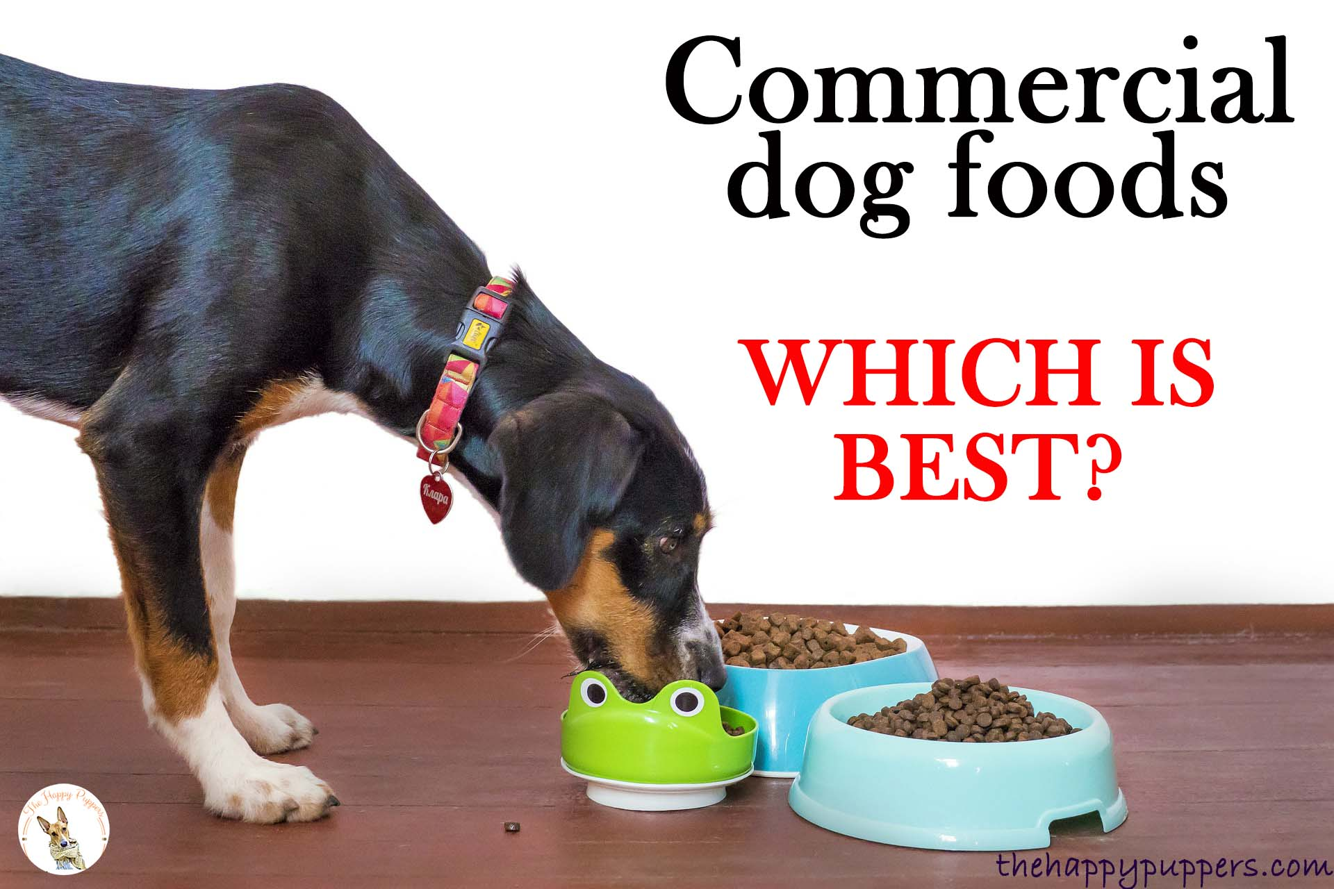 Commercial dog food: Which is the best option for your pup?