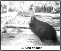Region fauna Indonesia timur