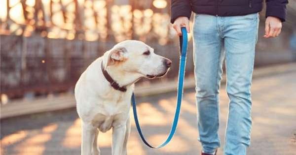 Πρόστιμο 300 ευρώ αν βγάζεις βόλτα τον σκύλο χωρίς λουρί