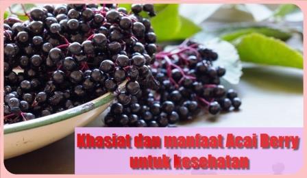 Khasiat dan Manfaat Acai Berry Bagi Kesehatan Si Buah Super