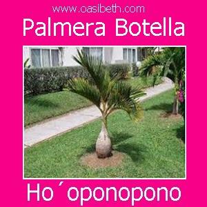 PALMERA BOTELLA