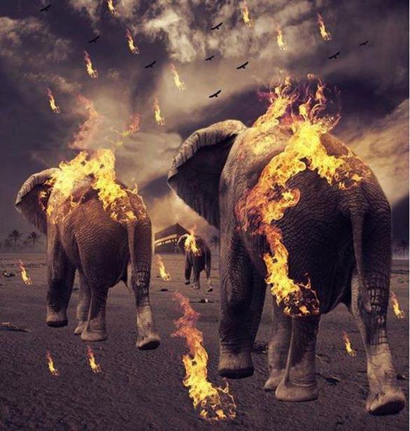 اصحابِ فیل کا واقعہ
