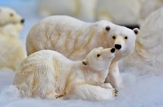 الدببة قطبية