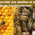 La société des abeilles et son mode de fonctionnement