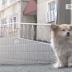 (Video) 'Hachiko Versi Mini': Anjing Ini Sudah 3 Tahun Menunggu Tuannya Pulang.. Setiap Hari, Ditempat Yang Sama