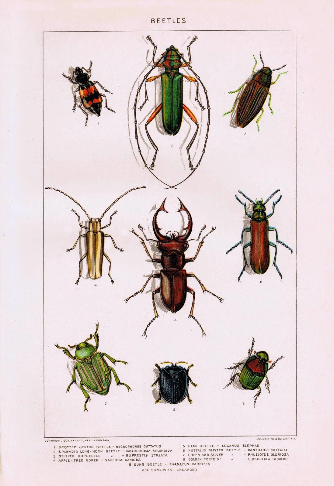 Genius image throughout bug printable