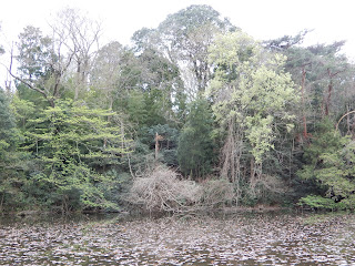 石神井公園園内風景