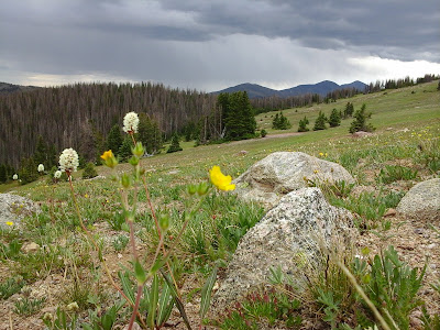 Wild flowers along in the mountians.