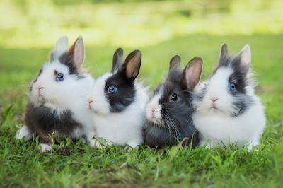 backyard rabbit farming business