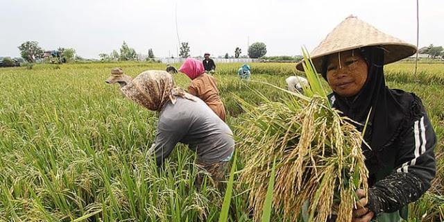 Pemerintah Putuskan Beri BLT Rp600 Ribu untuk 2,4 Juta Petani Miskin