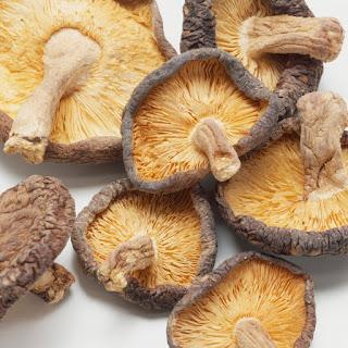 Mushroom farming training in Karad