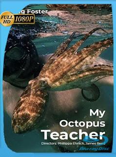 Mi maestro el pulpo (My Octopus Teacher) (2020) HD [1080p] Latino [GoogleDrive] SilvestreHD