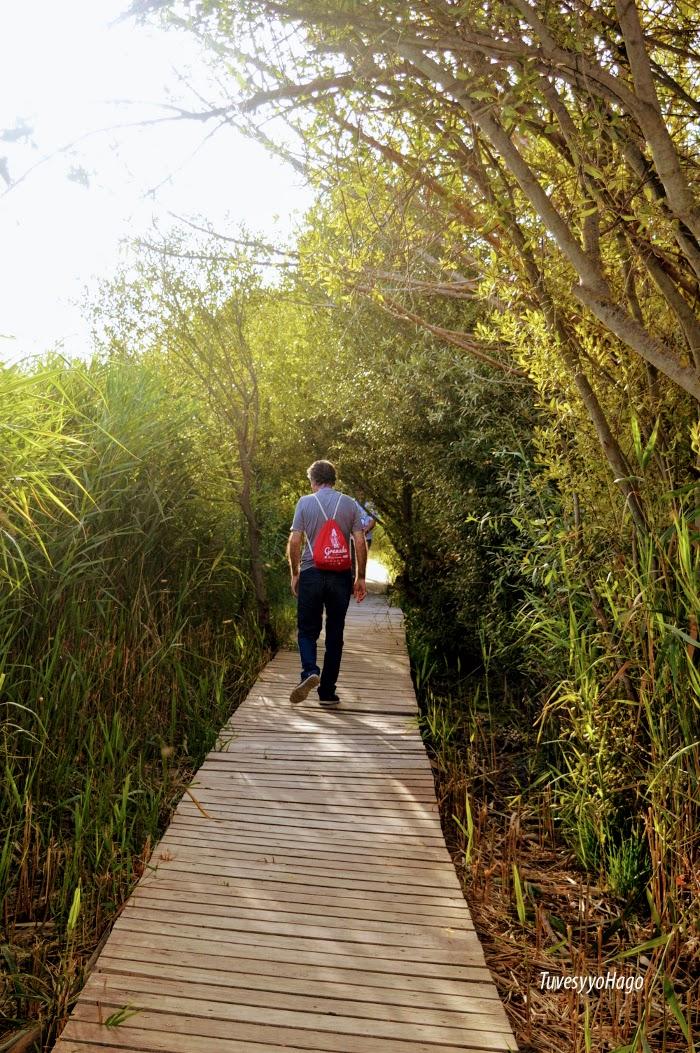 Sendero de la Laguna de Padul - A una hora de Granada - TuvesyyoHago