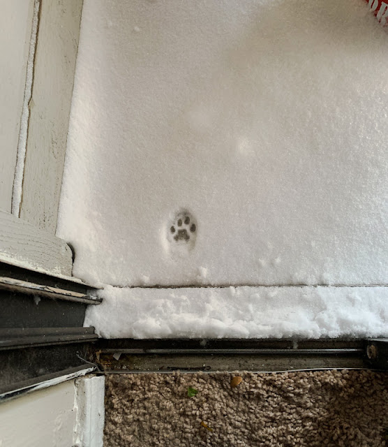 Cat print in the snow tells the story