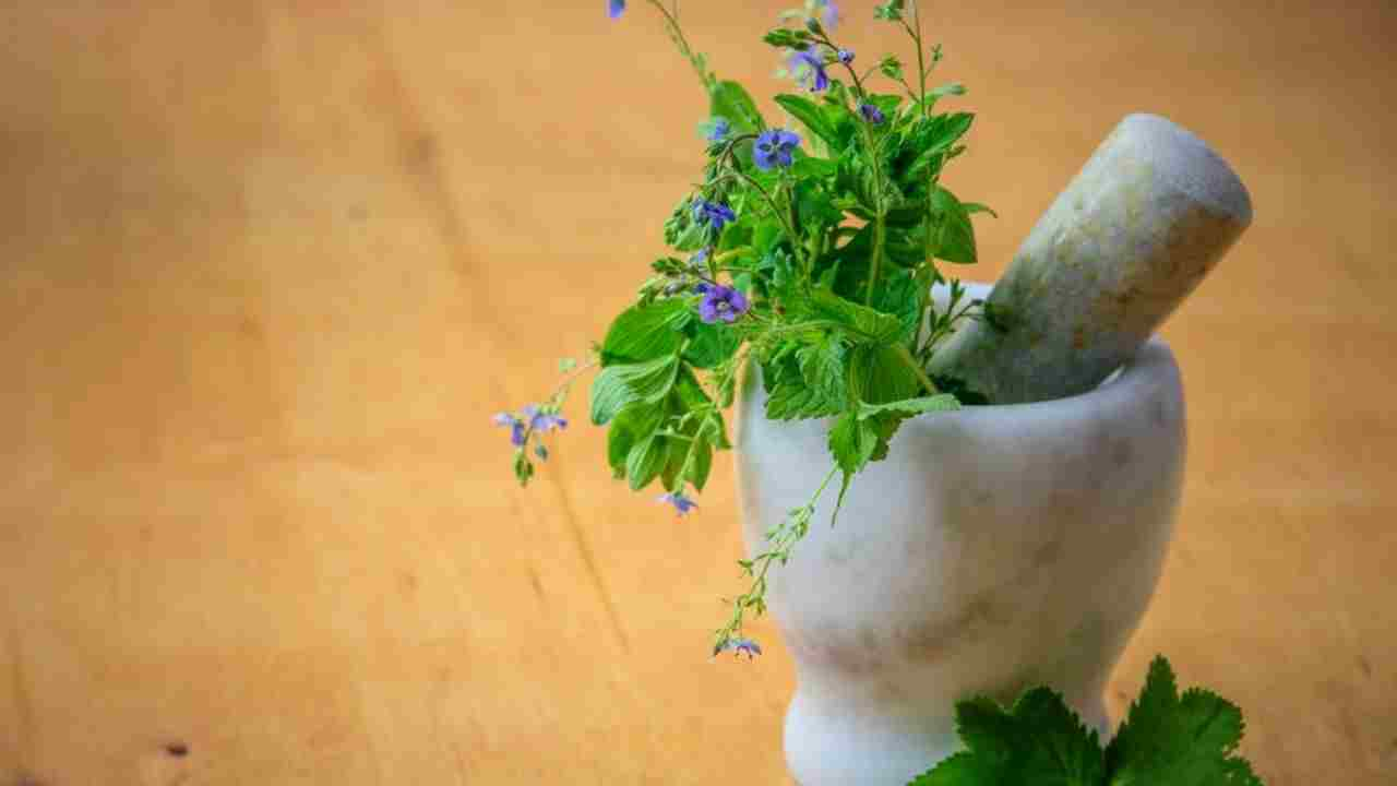 Herb's to Manage Diabetes | HealthInsta