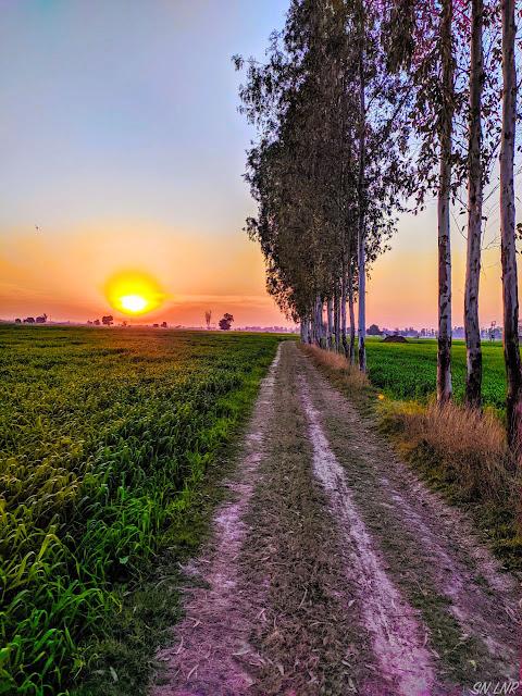 Такая разная Индия - Вечерний пейзаж (штат Харьяна)