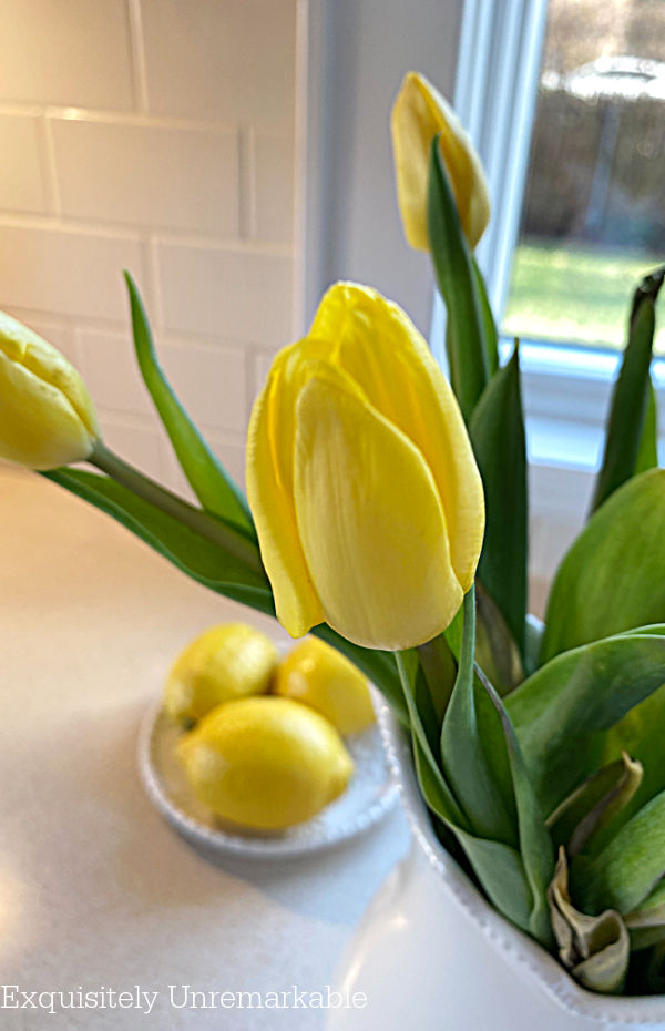 Yellow Tulip Bud