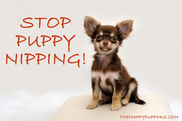 Stop puppy nipping behavior! A survival guide for new guardians