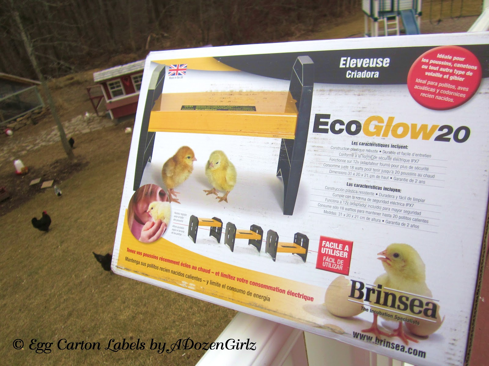 The Chicken Chick 174 The Dangers Of Brooder Heat Lamps Amp A Safe Alternative
