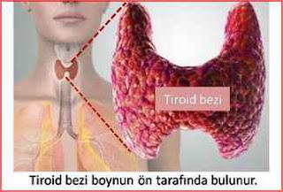 tiroid bezi hashimoto