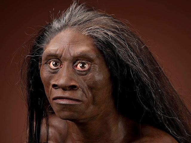 Garis Waktu Evolusioner Homo Sapiens