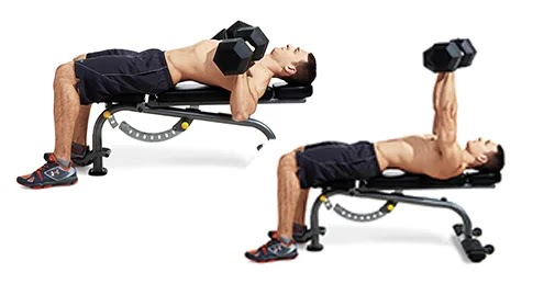 dumbbell-bench-press-chest-weights(fitness-w.com)